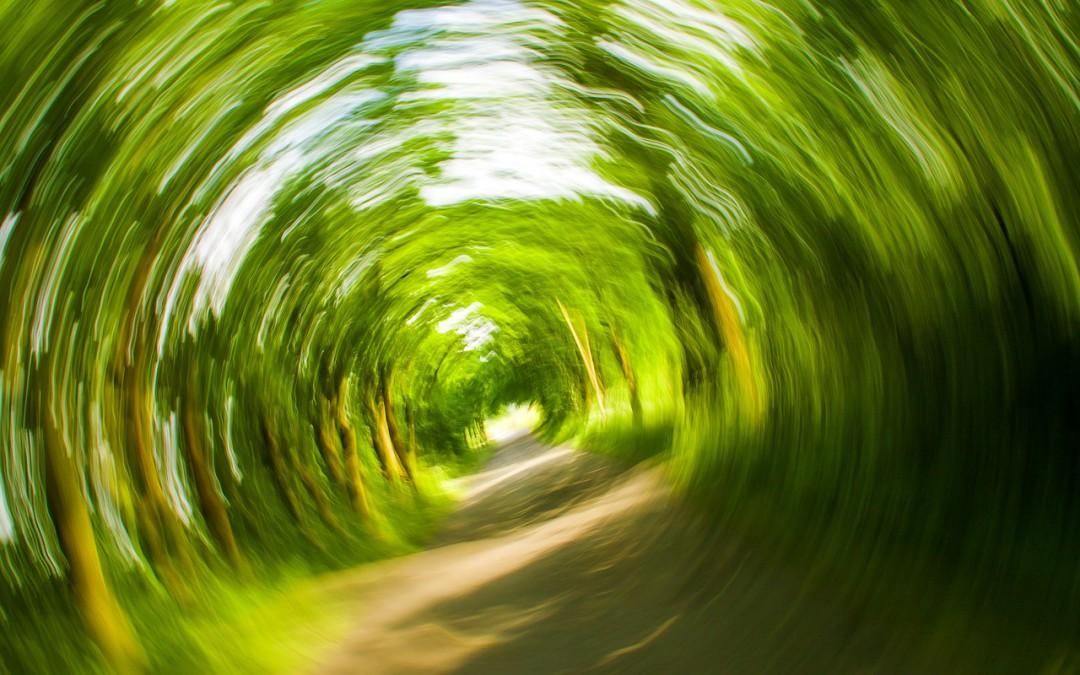 trees-358418_1280-1080x675