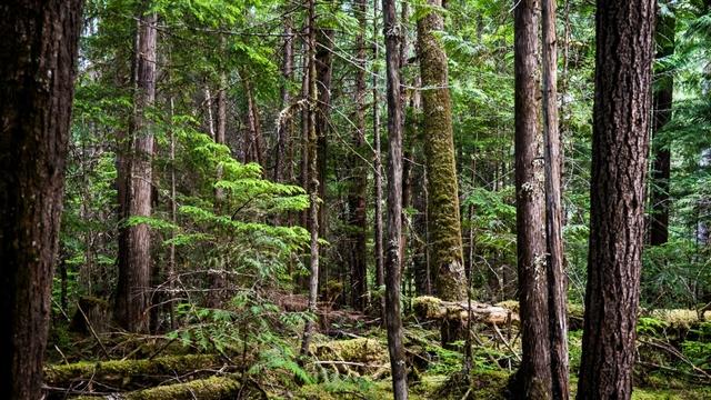woods-britain_1508157593654_4363583_ver1.0_640_360