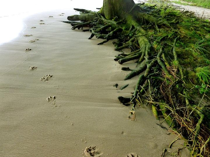 animal-tracks-1667740_960_720
